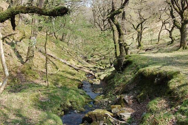 Woodland in Exmoor National Park